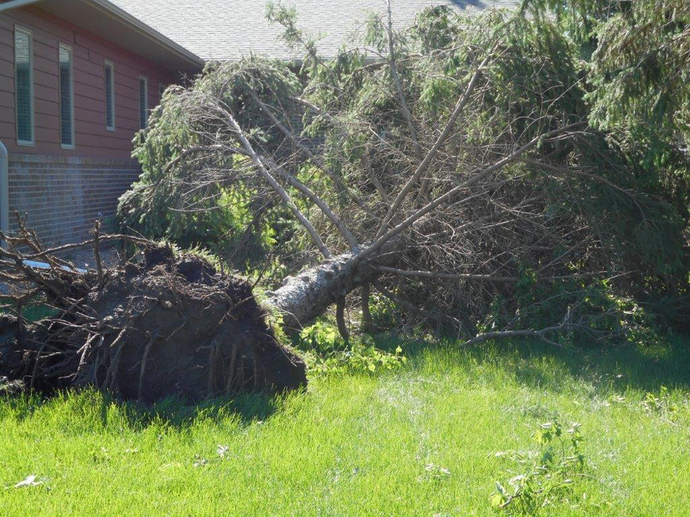Several trees were lost, but we're thankful that no one was injured in last week's storms.